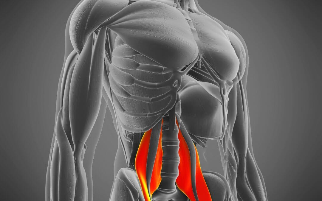 Psoas muscle affected by sitting